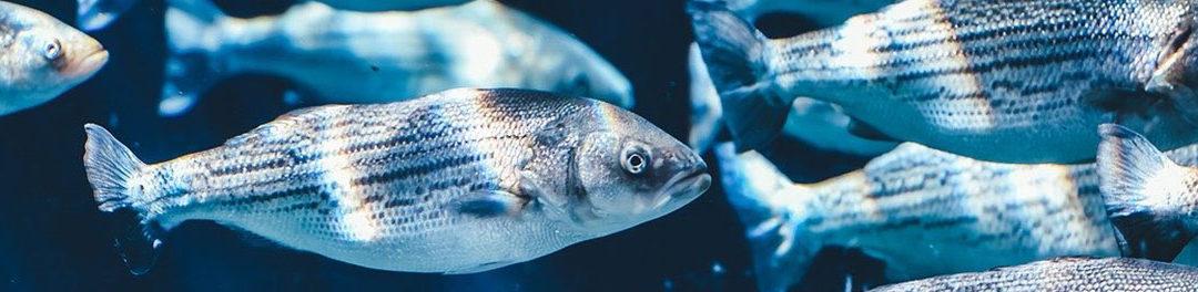 Bitte die großen Fische (der Digitalisierung) auf meinen Teller!