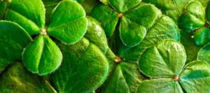 Mediolanum Irland